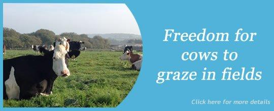 Free Range Dairy Slide - Cow