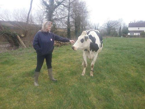 Free Range Dairy | Hobbs