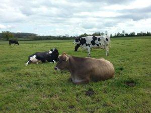Free Range Dairy | The Breakfast Club