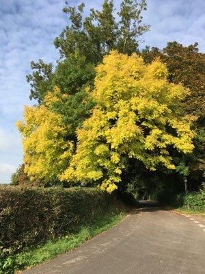 Free Range Dairy | Autumn trees