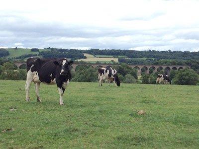 Free Range Dairy Richard Hunter