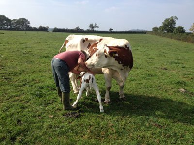Free Range Dairy | Man and Cow