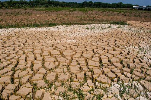 Free Range Dairy | Dry Earth