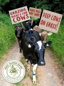 Free Range Dairy | Marching Cows